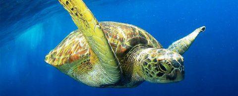 Крупнейшие мировые корпорации планируют очистить океаны от пластика
